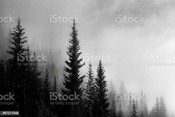 Photo of Forest Mountain Valley