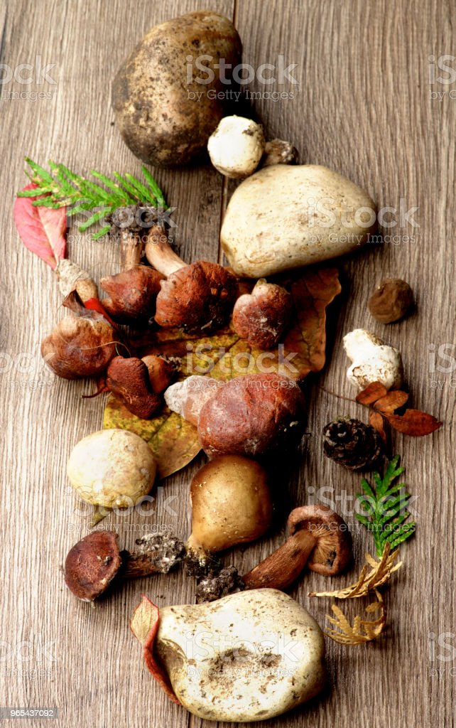 Forest Mushrooms Arrangement zbiór zdjęć royalty-free