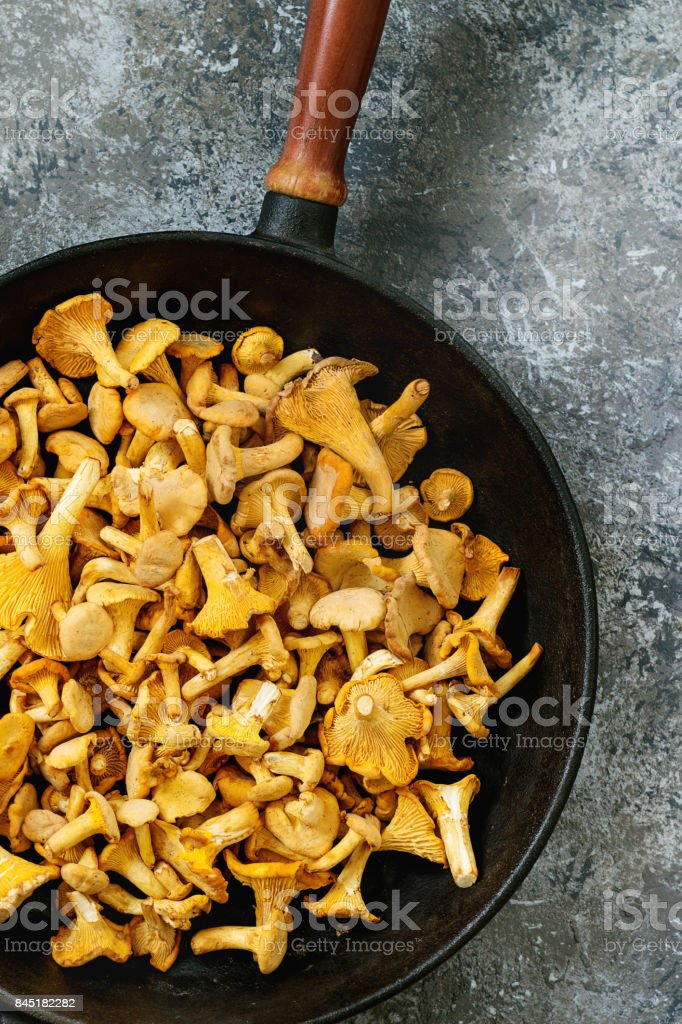 Forest mushrooms chanterelle stock photo