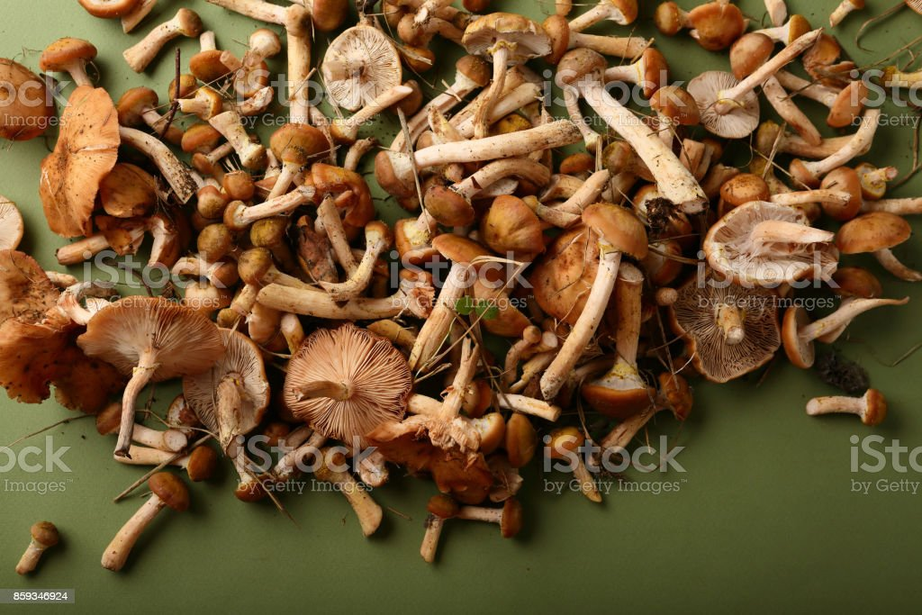 Forest mushrooms, food closeup stock photo