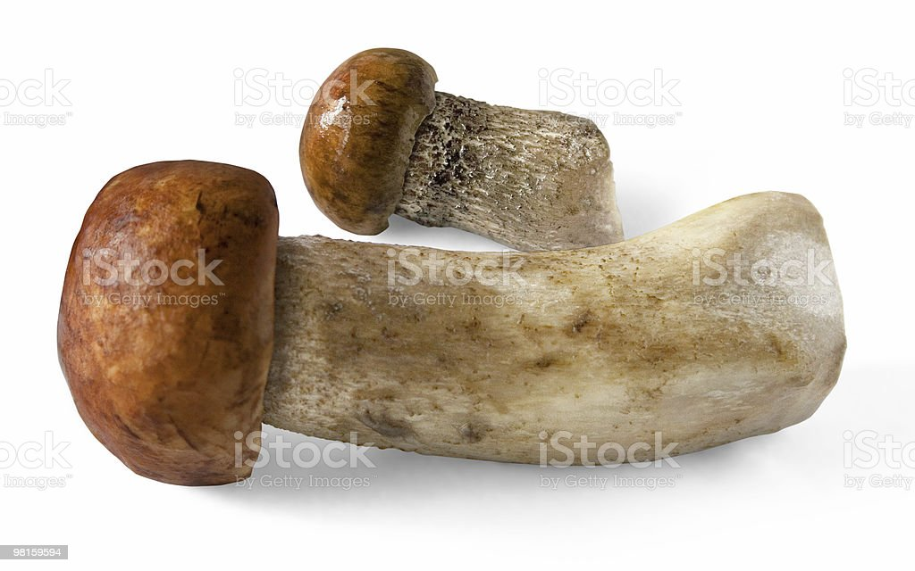 Foresta funghi foto stock royalty-free