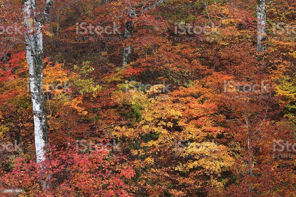 森の色の葉 ストックフォト
