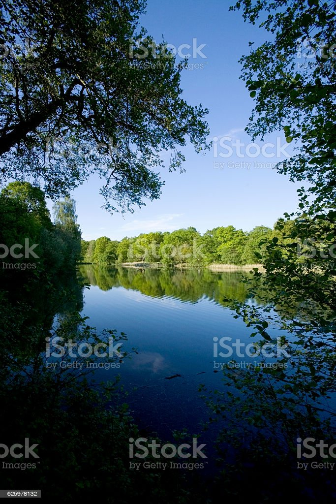 forest of dean gloucestershire uk stock photo