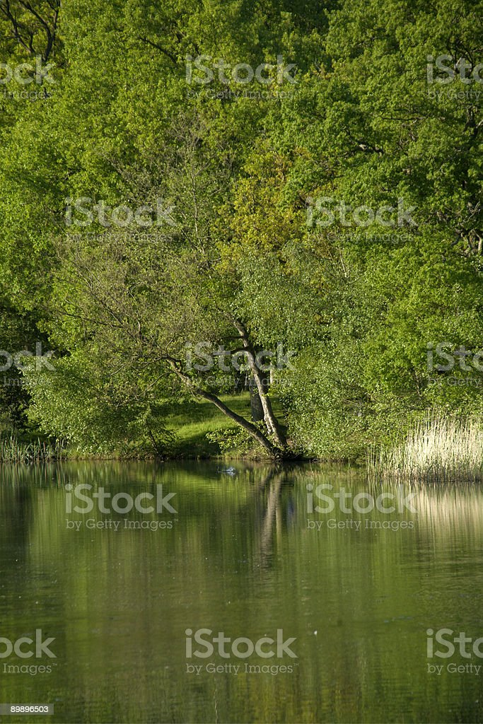 forest of dean royalty-free stock photo