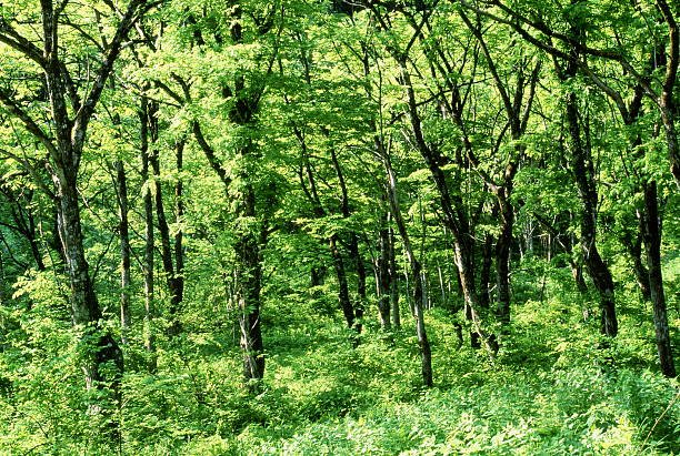 森林夏の早期 ストックフォト