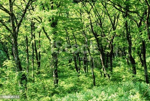 森林夏の早期 - 2015年のストックフォトや画像を多数ご用意