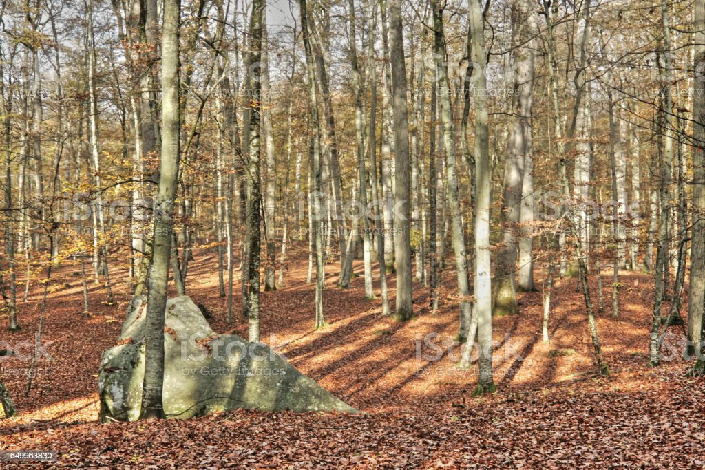 Forest of Fontainebleau in France stock photo