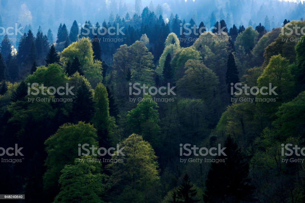 Forest of gree tree in national park stock photo