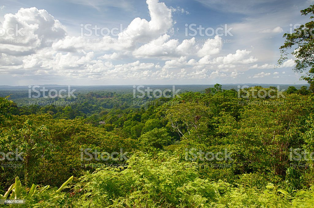 Image result for forest and French Guiana