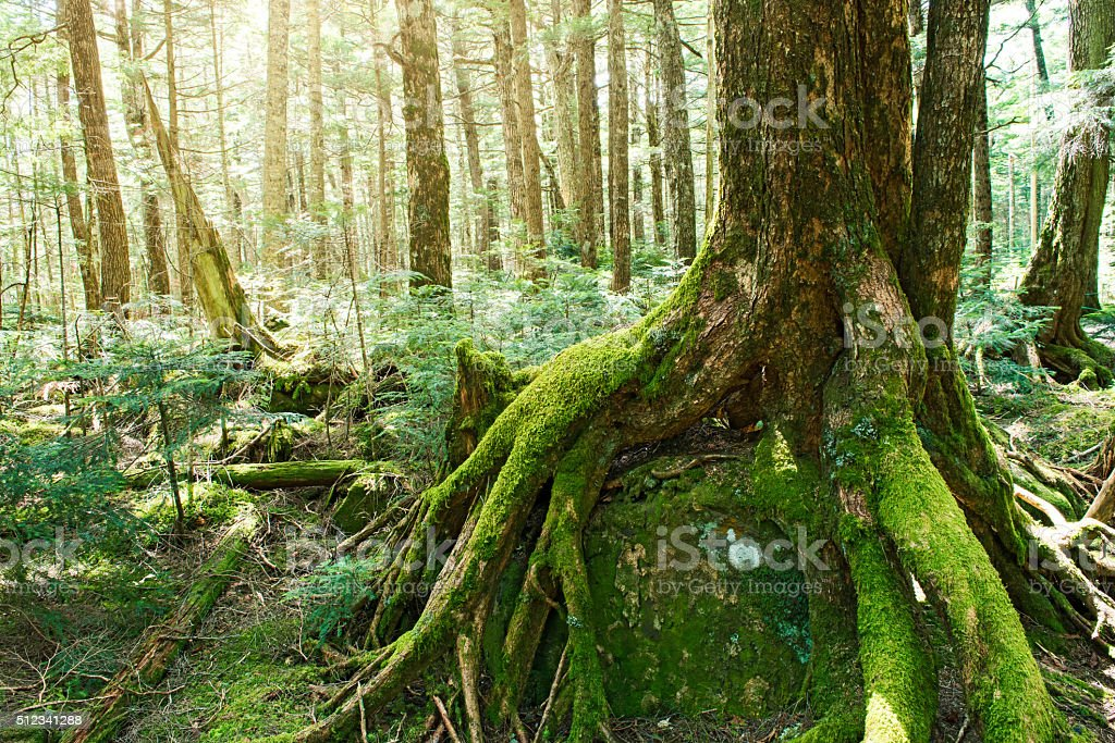 Forest of moss stock photo