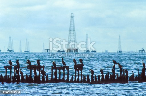 A forest of old off-shore oil derricks on Maracaibo lake, where an enormous deposits of oil discovered in the 1910s have made Venezuela one of the world's major oil exporters.