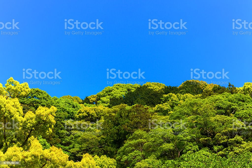 Forest of the village shrine, the tutelary deity, and the blue sky stock photo
