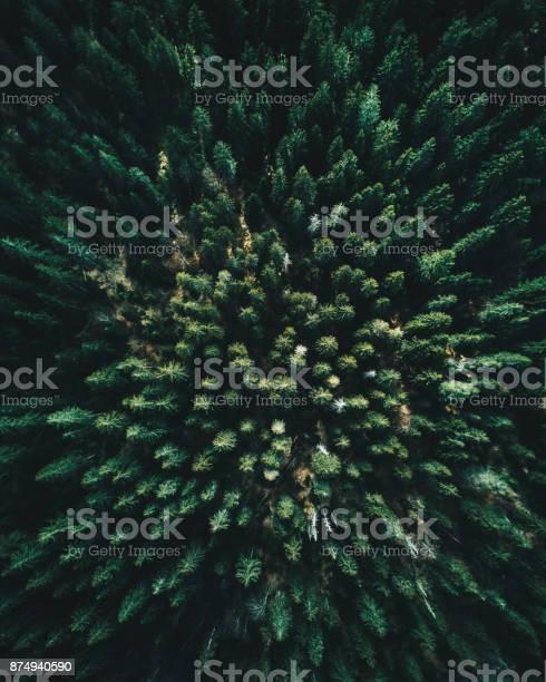 Forest of tree pines aerial view picture id874940590?b=1&k=6&m=874940590&s=612x612&h=iokckt 4k fy2xtdi 3dnfu 4cfzquau0qlighmaxzk=
