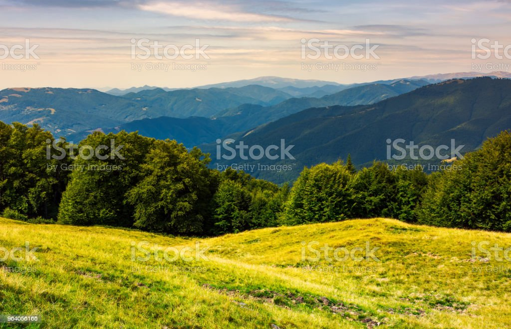 forest on a grassy meadow in mountains - Royalty-free Beauty Stock Photo