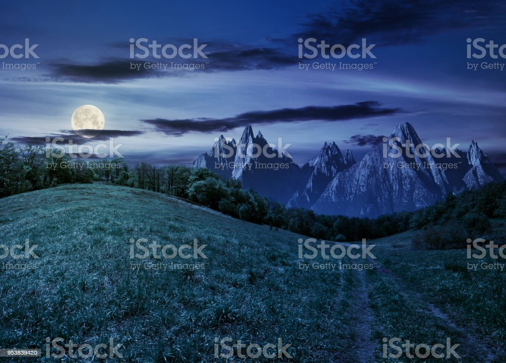 forest on grassy hillside in tatras at night stock photo