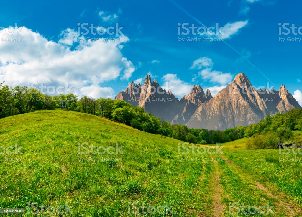 forest on grassy hillside in tatras stock photo