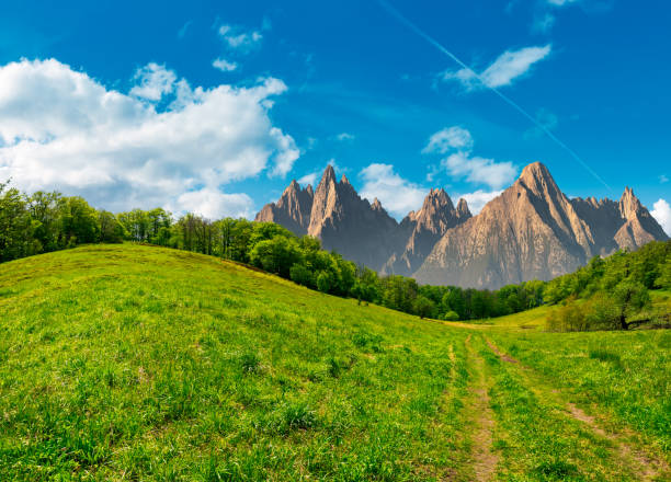 forest on grassy hillside in tatras stock photo