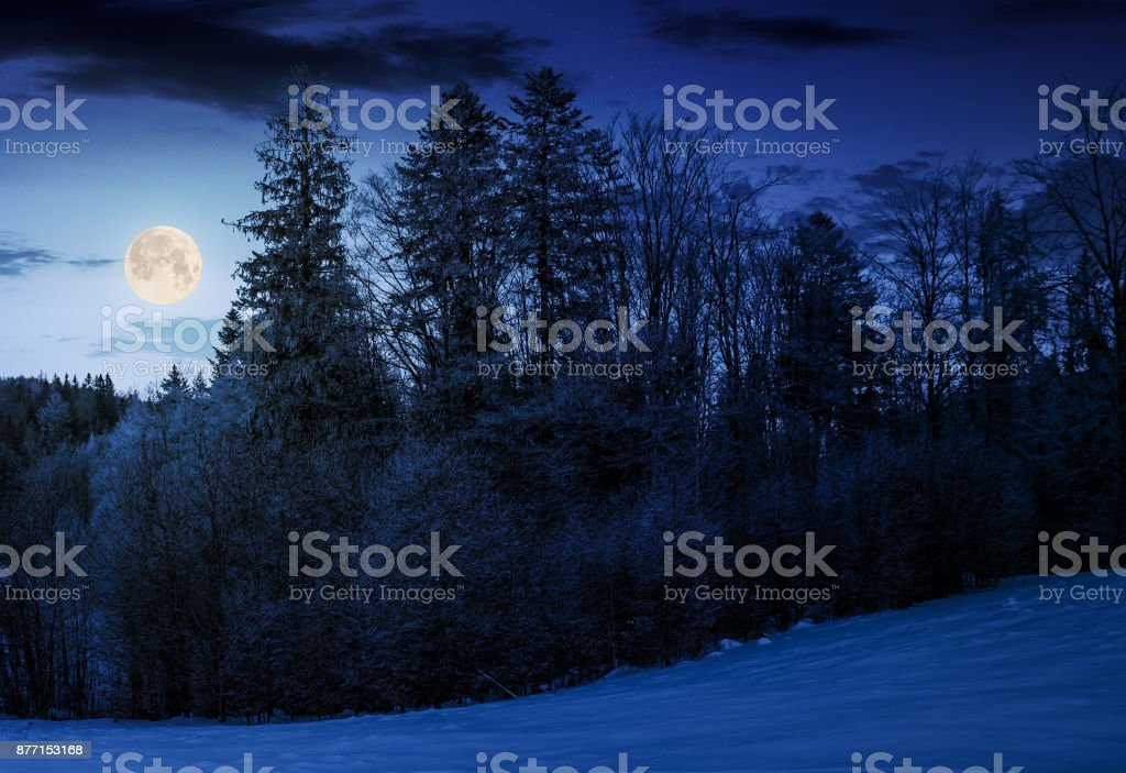 forest on snowy hillside at night stock photo