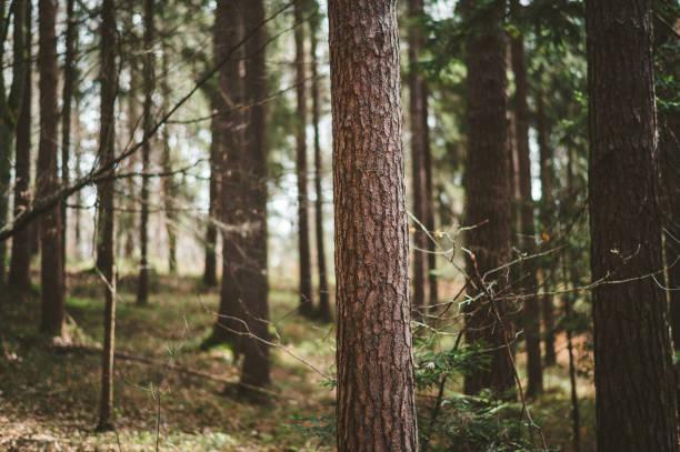 Wald am Frühlingstag – Foto