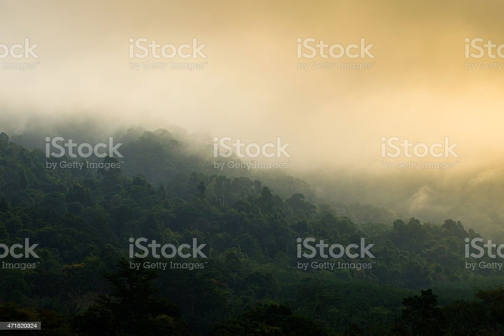 Forest on sunshine is fresh stock photo