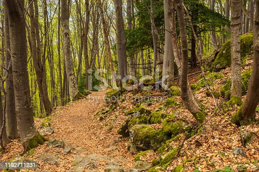 Forest on the hills of the Vitosha massif. Forest path, part of the trail. Spring season. Sofia, Bulgaria.