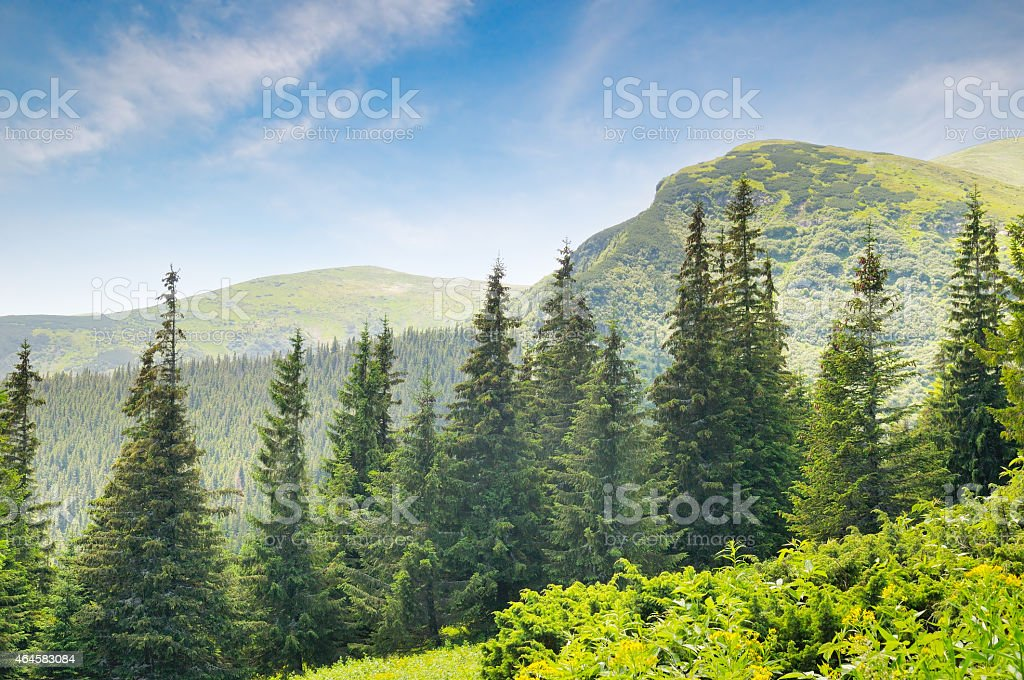 forest on the hillside stock photo
