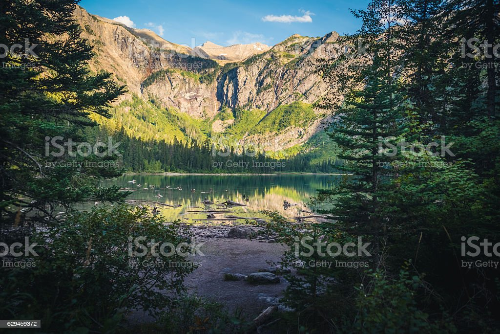 Forest opening leading to a lake. - foto de stock