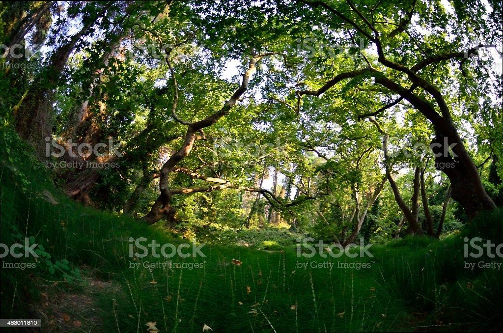forest ornamental grasses fisheye stock photo