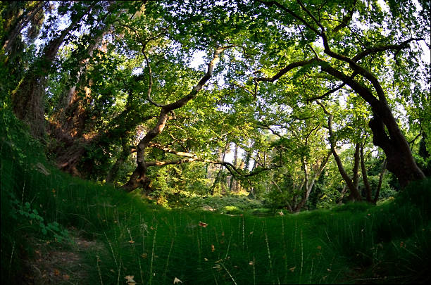 floresta ornamental grama olho de peixe - jardim do eden - fotografias e filmes do acervo