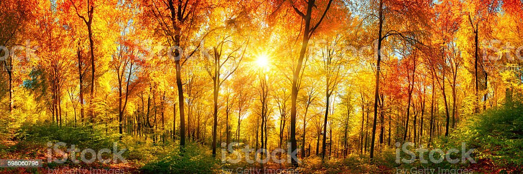 Forest panorama in autumn Autumn scenery in panorama format: a forest in vibrant warm colors with the sun shining through the leaves Autumn Stock Photo