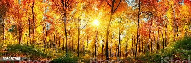 Forest Panorama In Autumn Stock Photo - Download Image Now
