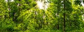 Waldpanorama im Frühling mit Sonnenstrahlen