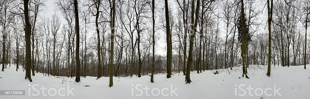 Forest panorama in winter - 360 degrees stock photo