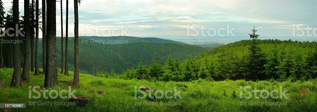 Wald-Panorama – Foto