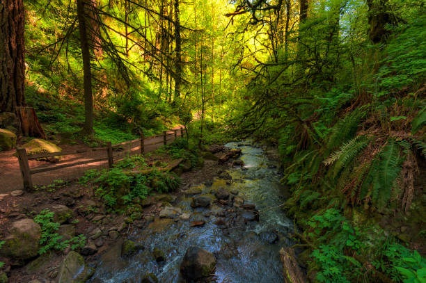 Forest Park trail in Portland, Oregon stock photo
