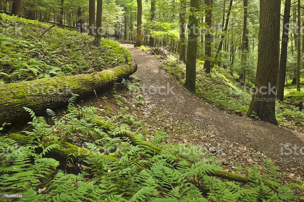 Forest Path along Moss-coverd Log and Young Ferns stock photo