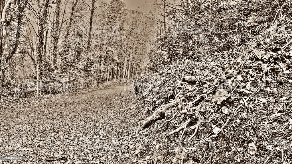 Forest path B royalty-free stock photo