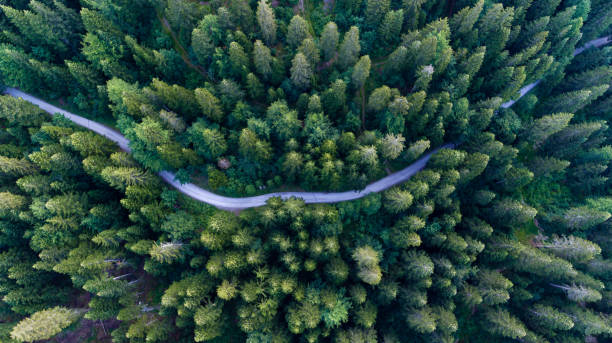 Wald-Pfad-Vogelperspektive – Foto
