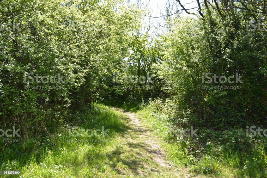 Forest path bluebells royalty-free stock photo