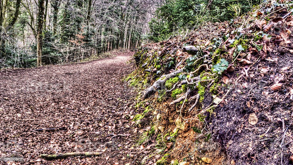 Forest path C royalty-free stock photo