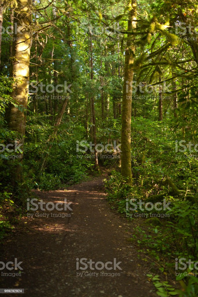 Forest Path, Cong, County Mayo, Ireland stock photo