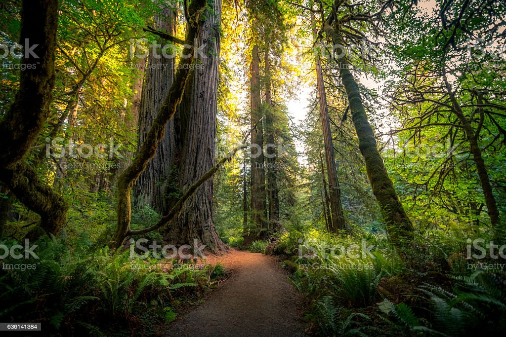 Forest path dappled with sunlight. - foto de stock