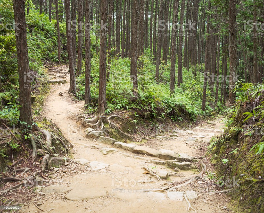 Forest path decision stock photo