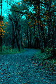 Forest Path During Moonlight