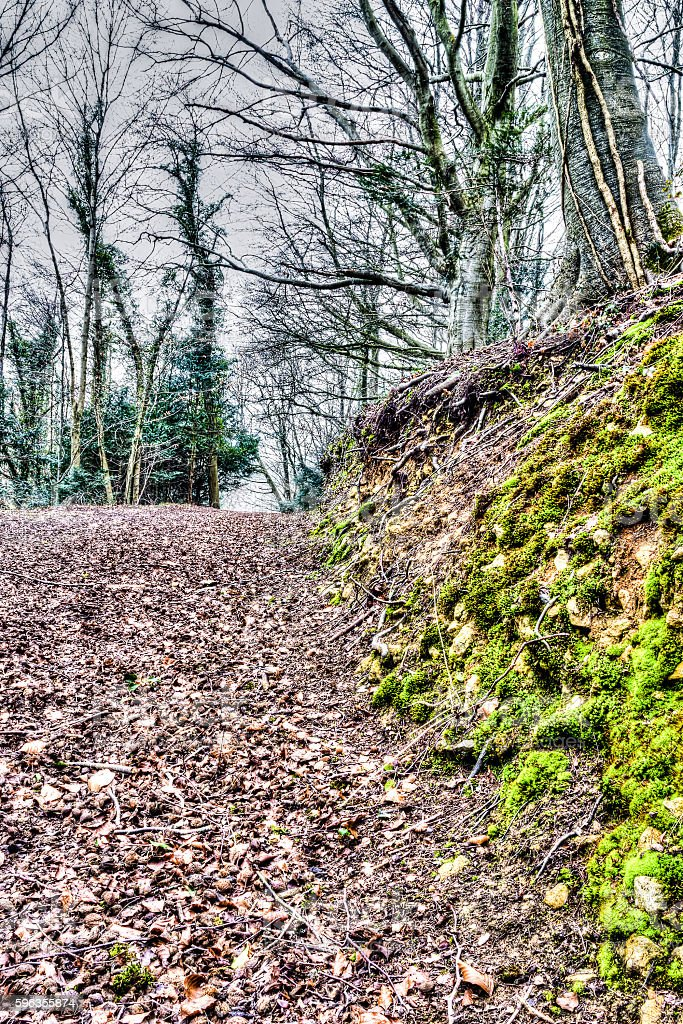 Forest path E royalty-free stock photo
