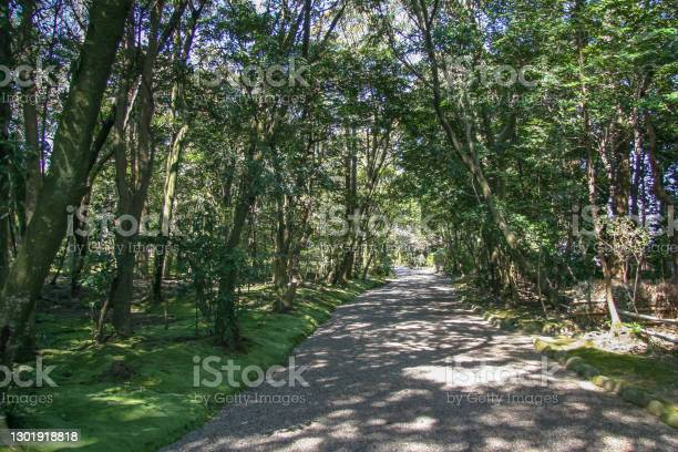 Photo of Forest path full of greenery