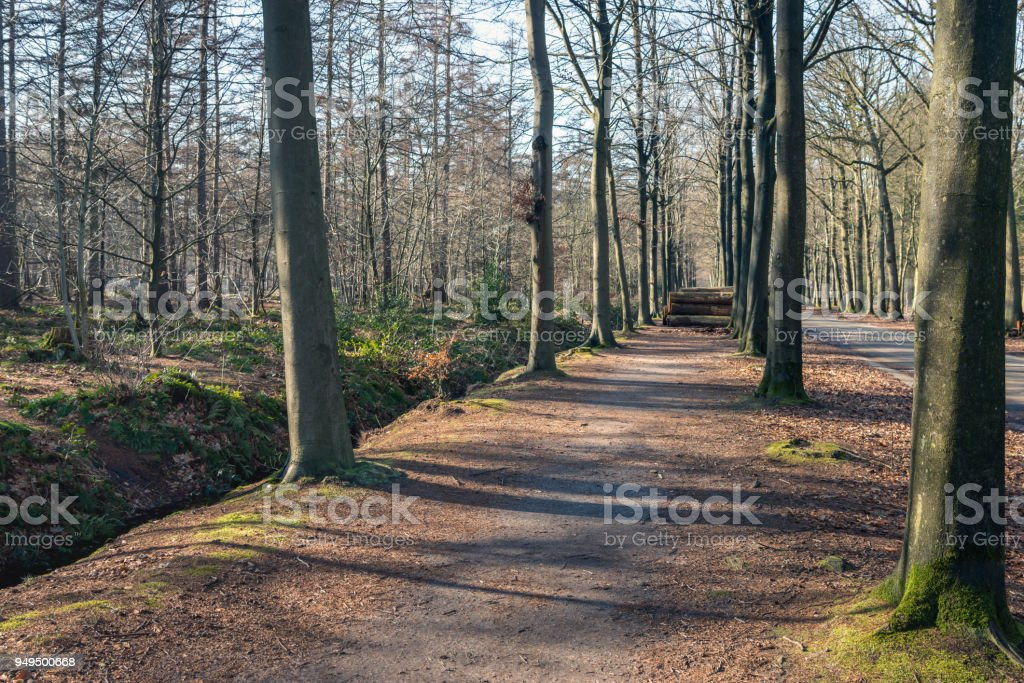 Forest path in a large forest stock photo