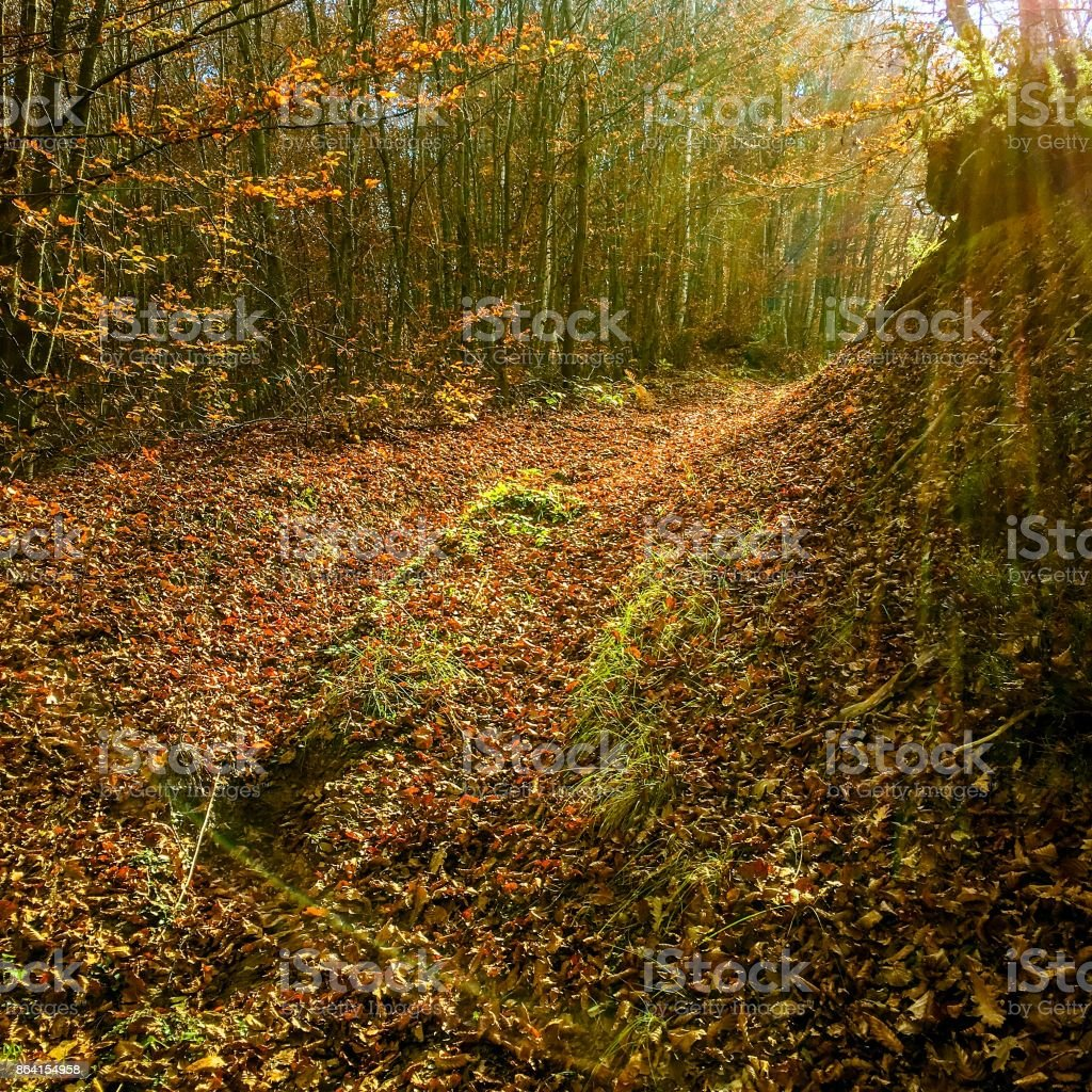 Forest path in autumn royalty-free stock photo