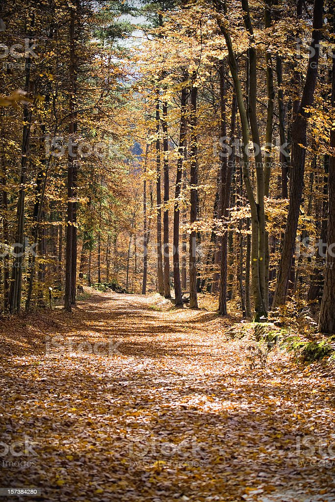 Forest path in fall royalty-free stock photo
