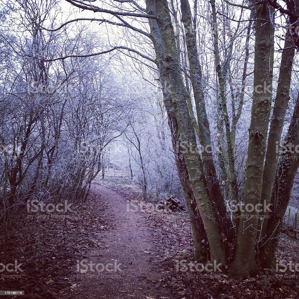 Forest path in Oxfordshire royalty-free stock photo